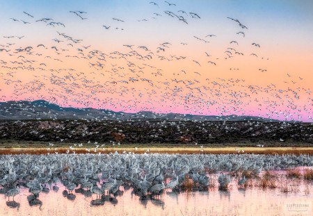 Blastoff At Bosque del Apache - Photo by Scott Bourne