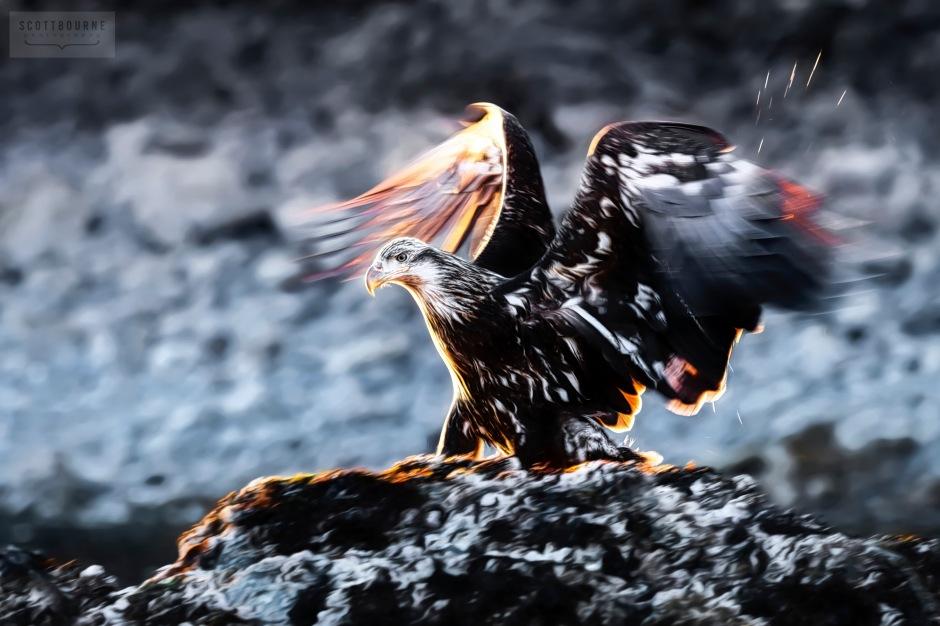 Backlit Eagle Photograph by Scott Bourne