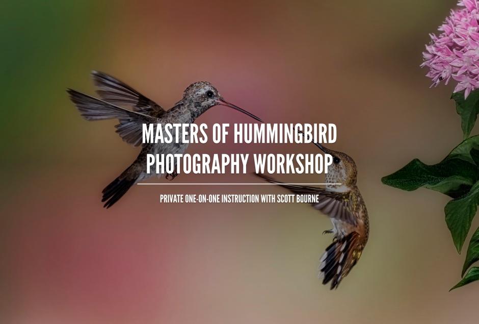 Hummingbird Photography Workshop With Scott Bourne