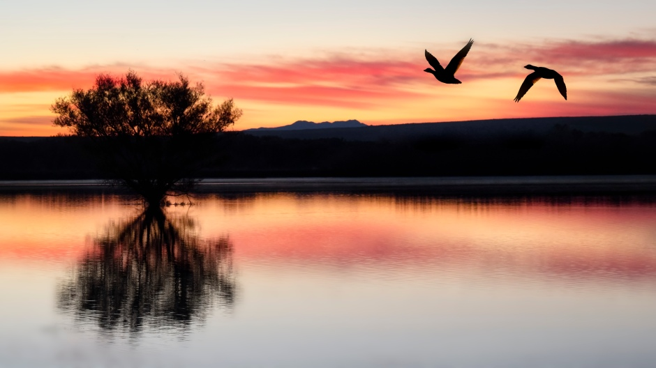 Two Geese Flying Through Sunrise In New Mexico - photo by Scott Bourne