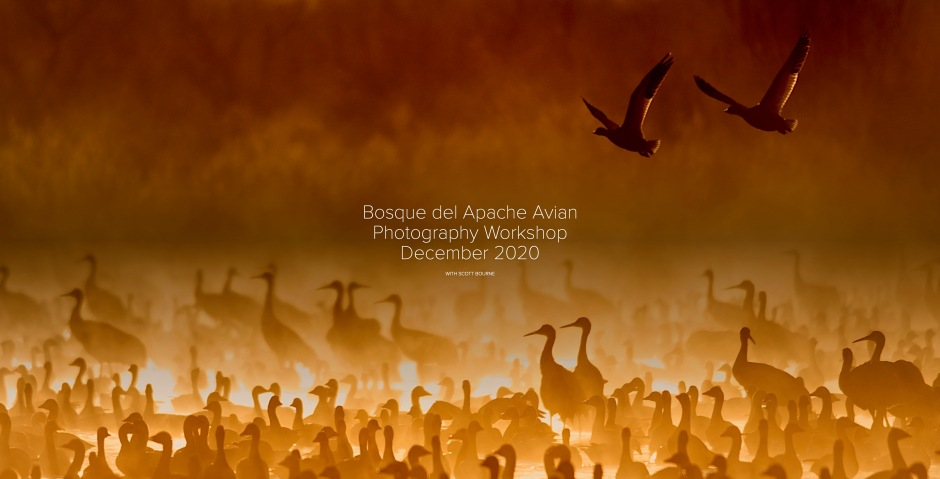 2020 Bosque del Apache Photo Tour With Scott Bourne