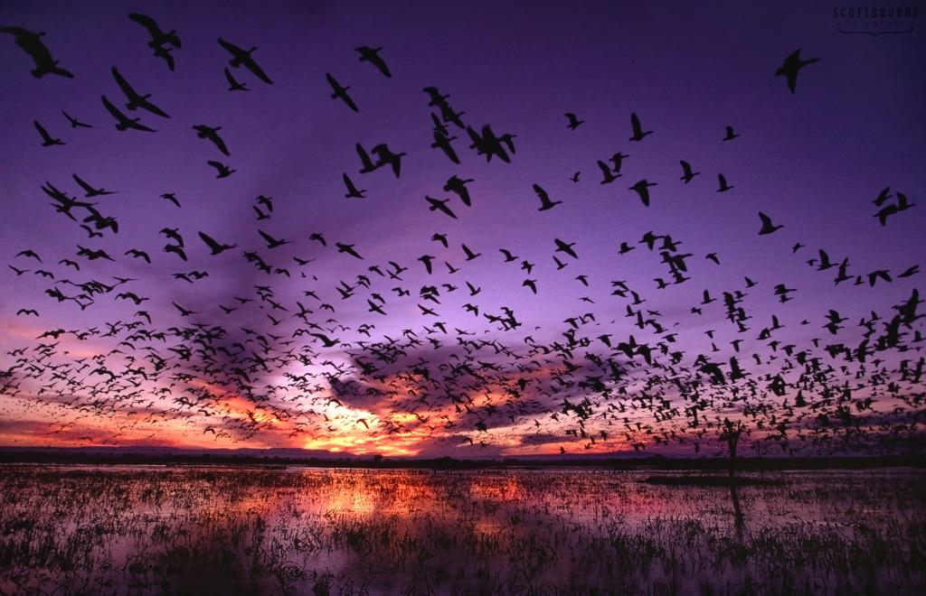 Bird photography by Scott Bourne