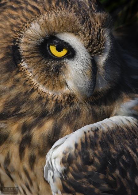Eagle Owl Photo by Scott Bourne