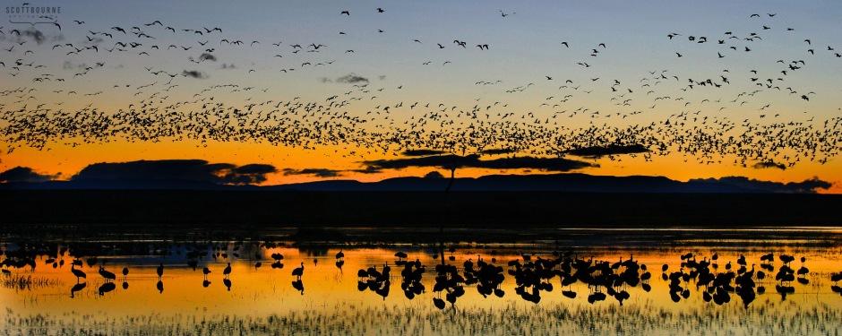 Bosque Sunset Photo by Scott Bourne