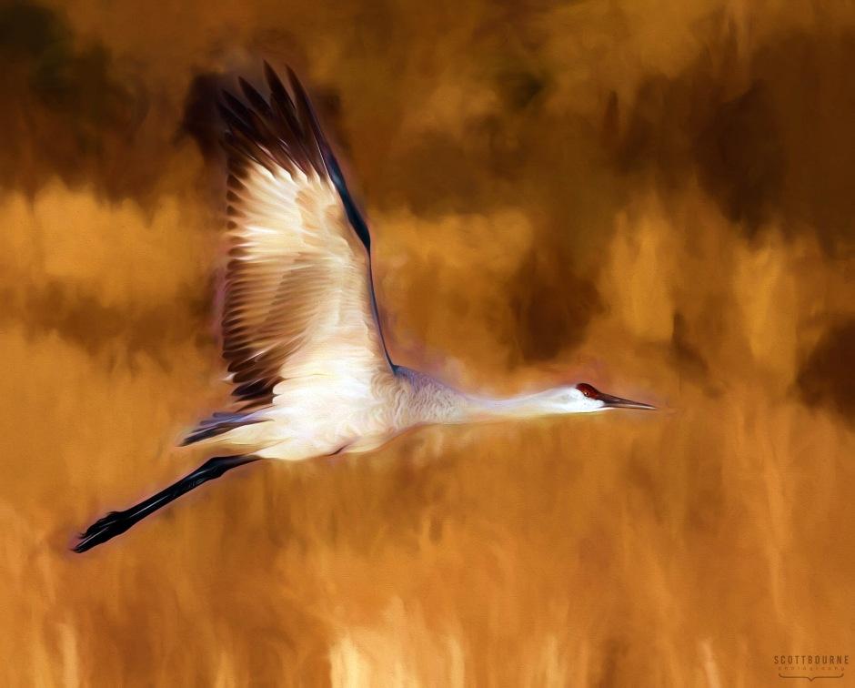 Crane photo by Scott Bourne