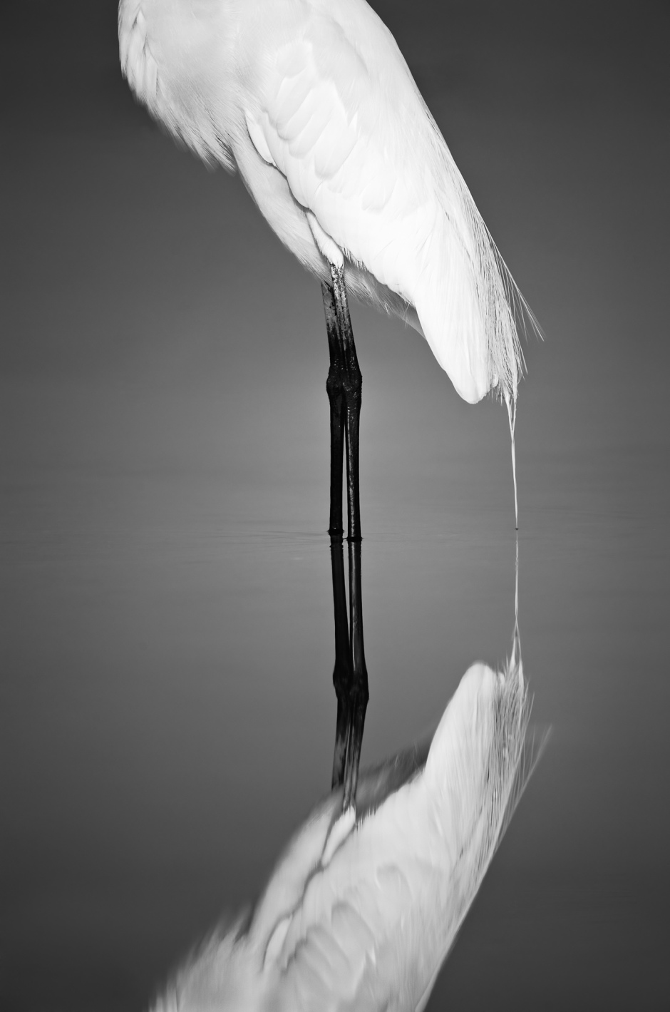 Great Egret Photo by Scott Bourne