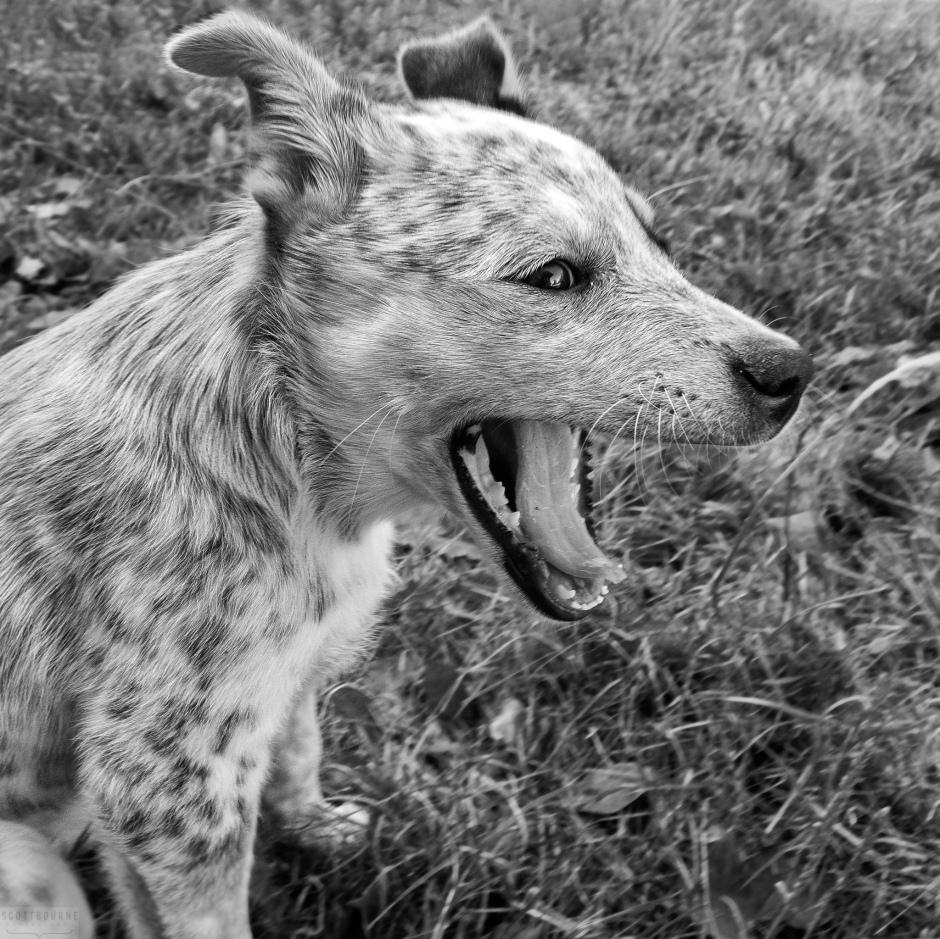 Jeff's Dog Shot W/ TG-6 - Photo by Scott Bourne