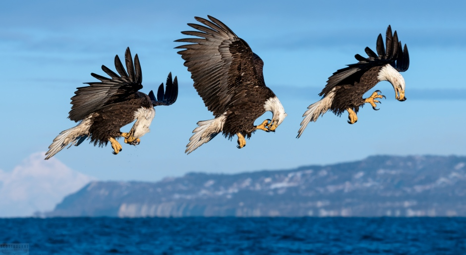 Eagle photograph by Scott Bourne
