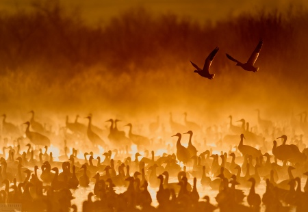 Cranes In The Fire Mist by Scott Bourne