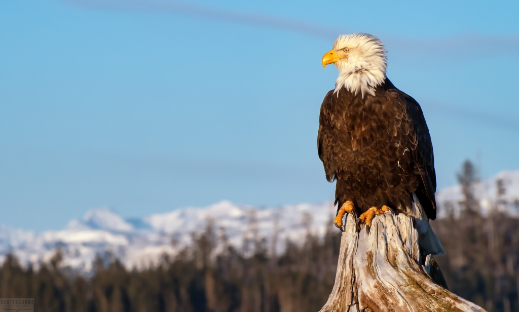 Eagle Photograph by Scott Bourne