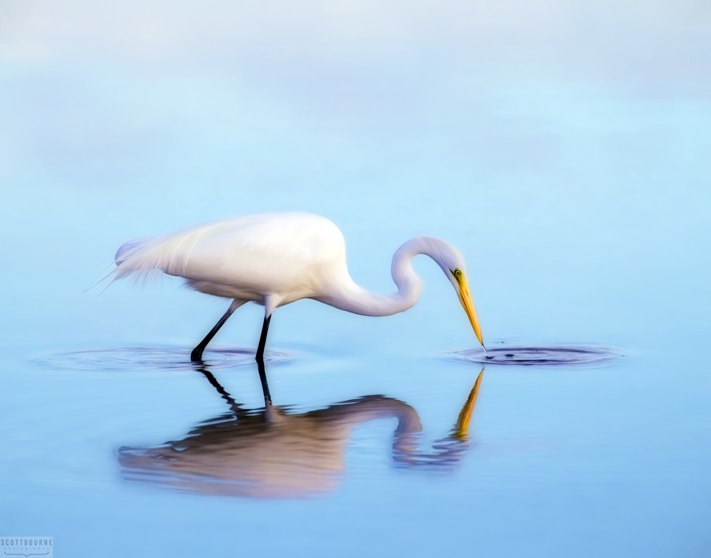Egret Photograph by Scott Bourne