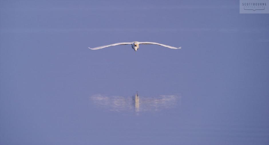 Bird photograph by Scott Bourne