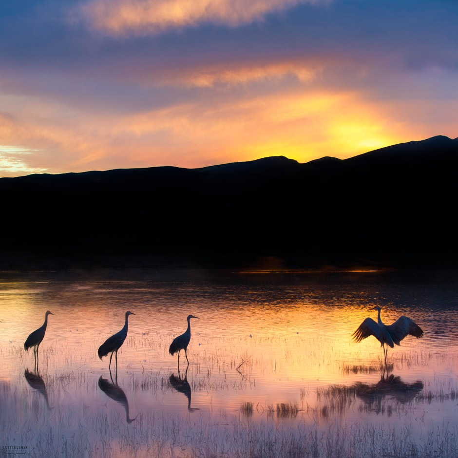 Sandhill cranes at sunset photo by Scott Bourne