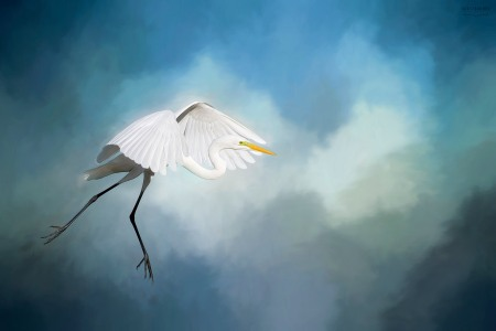Cloud Dancing - Egret photo by Scott Bourne