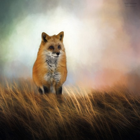 Fox Photo by Scott Bourne