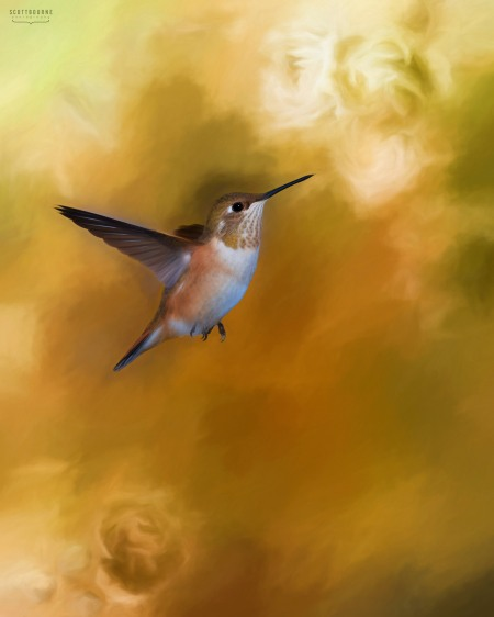 Hummingbird photo painting by Scott Bourne