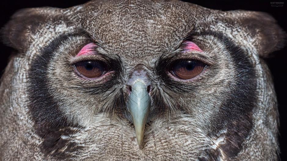 Owl Photo by Scott Bourne
