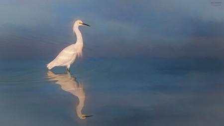 Egret Photo Painting by Scott Bourne