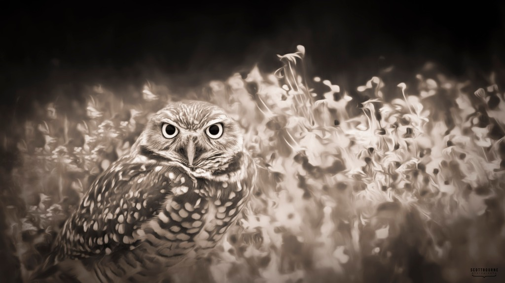 Burrowing Owl Photo by Scott Bourne
