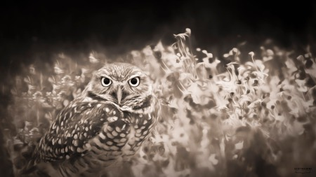 Burrowing Owl Photo by Scott Bourne