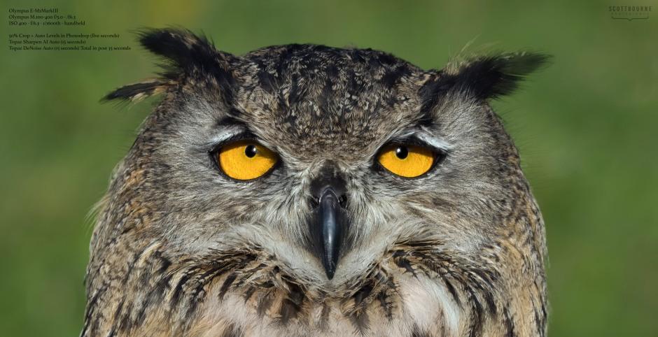 Bird photo by Scott Bourne